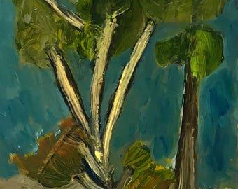 Daintree tree