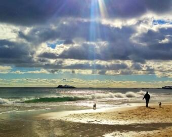 Ocean Photographic Print, Seashore , Ray of Light on Dog, Wall Decor, Wall Hanging