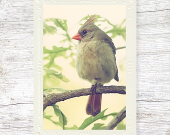 Cardinal Photo Note Card, Card with Bird, Blank Card, Gift for Her, Nature Photography