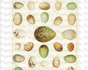 Egg Digital Download Collage Sheet