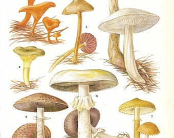 Vintage Fungi Coloured Book Plate - Fungi - Ideal For Framing # 103