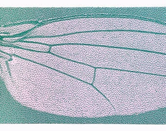 Insect wing illustration giant fly wing