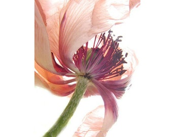 Poppy Print, Flower Photography, Floral Art Print,  Flower Wall Decor, Nature Photography