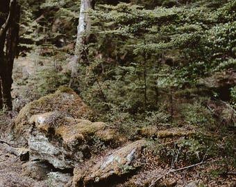 Moss & Lichen In Native Beech Forest, Fine Art Photography, Print, Wall Décor, Home Décor, New Zealand