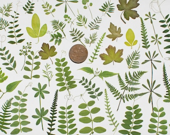 50  Pressed Leaves Green Flowers for Card making Scrapbooking art supplies, craft supplies, embelishments