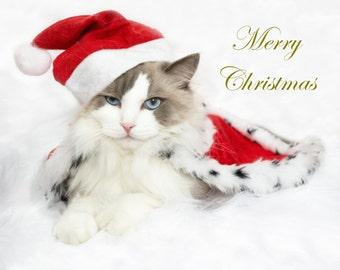 Merry  Cat e-Card  - Golden Edition
