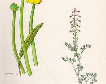 ANTIQUE BOTANICAL PRINT flowers and plants 26