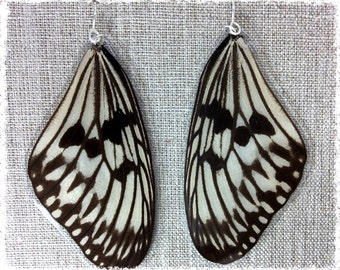 Real Butterfly Wing Earrings; Butterfly Wing Jewelry; Butterfly Earrings; Transparent; Cream White and Black; TOP Wing