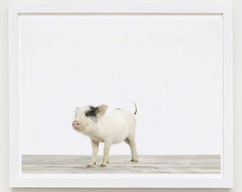 Baby Animal Nursery Art Print. Piglet. Animal Nursery Decor. Baby Animal Photo.