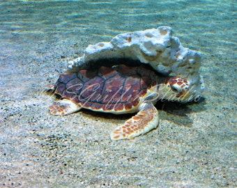 Sea Turtle Photo, Original Photography, Photo Print, Turtle Art, Wall Art