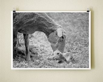 NEWBORN - 8x10 Signed Fine Art Photograph