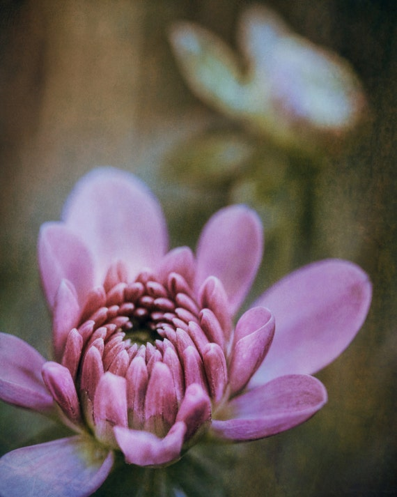 "Metal Art Print ""Romance III"", Flower Photography Printed on Aluminum with Flush Frame, 16x20, Special Order"