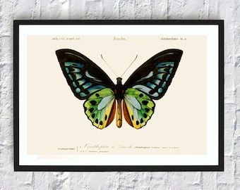 Butterfly print butterfly illustrations vintage antique print animals print wall art print kitchen decor poster