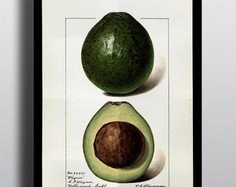 Antique Avocado Print Art Prints Poster Fruit Prints Home Decor Wall Art Wall Prints Kitchen Decor