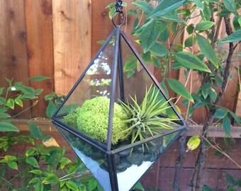 Hanging Glass Geometric Air Plant Terrarium Planter with Green Moss, Black Stones & White Sand Kit
