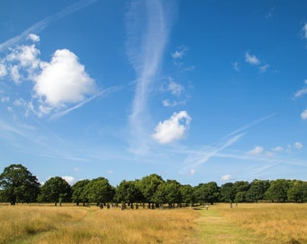 Sky Print - Nature Photography - Richmond Park - London