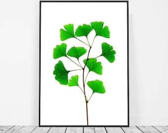 Botanical Print, Ginkgo Leaf Art, Botanical Poster, Botanical Leaf Print, Green Wall Art, Green Print, Gingko Leaf