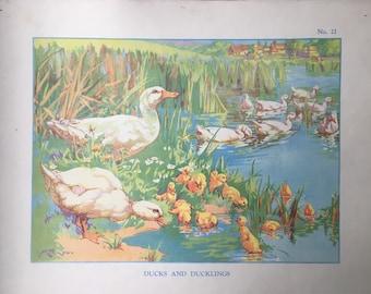 VINTAGE School Poster, Wall Chart, DUCKS, DUCKLINGS, Farm, Animal Print