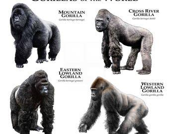 Gorillas of the World