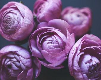 "Pink ranunculus flower still life, botanical print wall art, cottage chic decor, nursery baby room decor, floral wall art  ""Ranunculus One"""