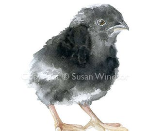Baby Barred Rock Chick Watercolor Painting Fine Art Print Giclee Print 8 x 10 / 8.5 x 11 - Chicken Farm Art