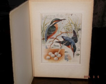 "Vintage 1908 ""The Kingfisher"" postcard in frame by Raphael Tuck & Sons"