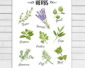 Herbs Print Kitchen Art Print Basil Oregano Lavender Sage Thyme Mint Dill Botanical Art Kitchen Decor Herbs Digital PRINTABLE download 8x10