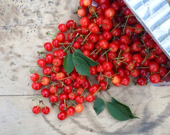 Spilled Cherries Kitchen Square Photograph Fine Art Print