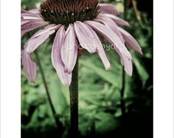 8 x 10 Kentucky Wildflower  photo print