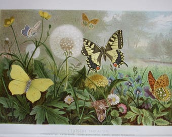 colourful litho butterflies 1895