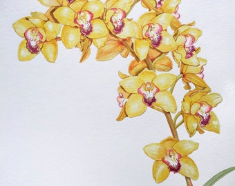 Original Watercolor Painting of a Yellow Orchid Flower - Botanical Art, Home Decor