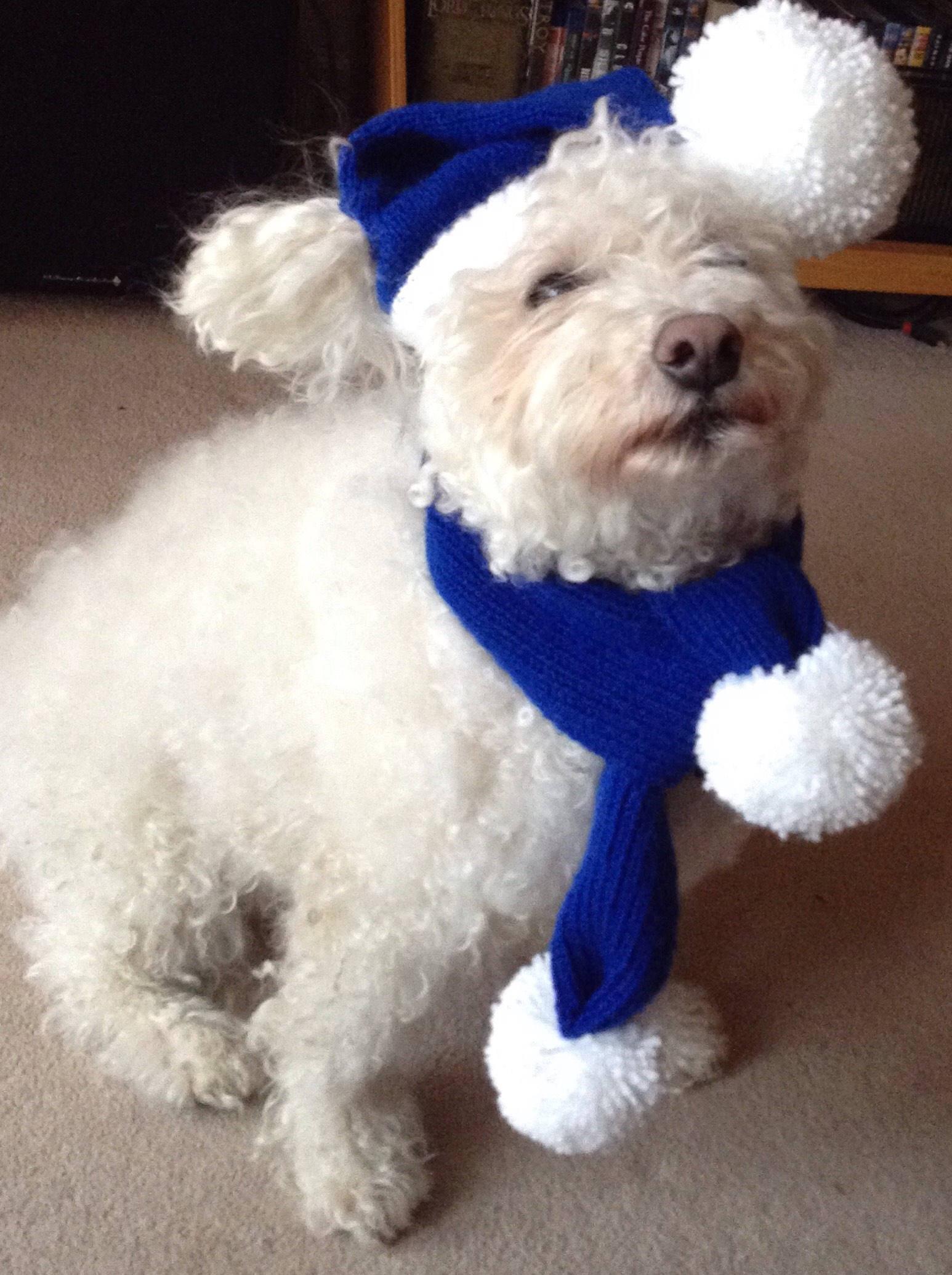 Lovely Blue dog hat & scarf-.Everton FC-EFC-dog gift-Chelsea FC- Blue  EI68