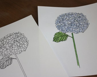 Daisy Flower Line Drawing : Stalk flower line drawing reproduction from original ink
