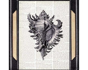 SEA SHELL art print Ernst Heinrick Haeckel natural science marine nautical ocean upcycled vintage dictionary book page wall decor 8x10, 5x7