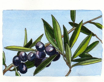 Olive Branch, Original Watercolour Painting