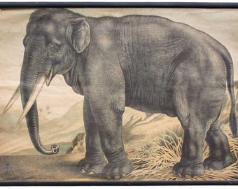 Elephant, educational chart , 1891