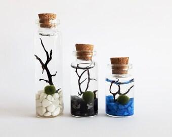 Marimo moss ball terrarium kit - DIY clear small glass bottle aquarium