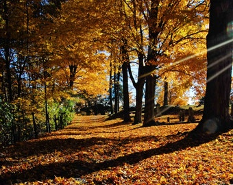 Autumn Decor, Fall Wall Art, Colorful Leaves, Fall Foliage, Nature Landscape, Golden Light, Rustic Decor, Fall Print, Large Wall Decor