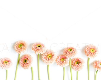 Set of 2 Daisy Styled Stock Photography / Product Background /Daisy Blooms / Flower Banner