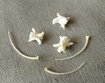 Real Bones: Snake Vertebra and/or Ribs for Crafting