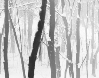 Forest covered in snow...Signed photograph, original artwork, high resolution.