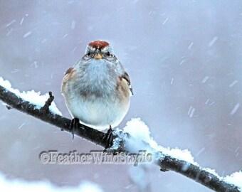 American Tree Sparrow Photo | Fine Art Bird Snow Storm Photography | Winter Wall Art | Snow Flakes | Feather Wind Studio Original Bird Print