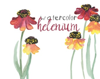 Watercolor Floral Helenium Clipart INSTANT download Digital Clip Art Fall Flower Clipart Autumn Floral Watercolors Commercial Use