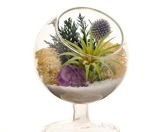 "Air Plant Terrarium Kit / 4"" Round Glass Pedestal / Shabby Chic"