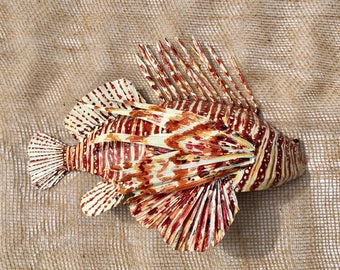 Palm Frond Fish - Lionfish