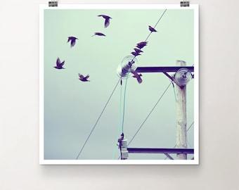 PeerPressure - FineArt Print Nature Birds Flock Electricity Sky Summer Bird