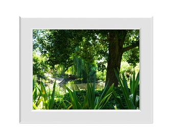 Digital Photo - Adelaide Botanic Gardens - South Australia