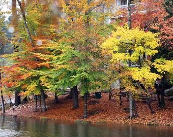 Fall Photography- Autumn Trees Print, Fall Foliage Landscape Photograph, Colors of Fall Print, Autumn Leaves, Fall Home Decor, Nature Photo