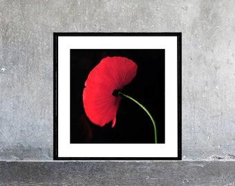 Red PoppyArt Print, Poppy Flower Photography, Modern Minimalist Wall Art, Red Black Decor, Floral Art Print