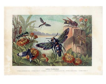 c. 1900 WASPS & INSECTS of INDIA - original antique print - bugs and beetles in Asia color lithograph